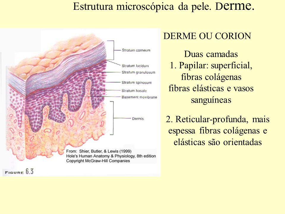 Estrutura microscópica da pele.