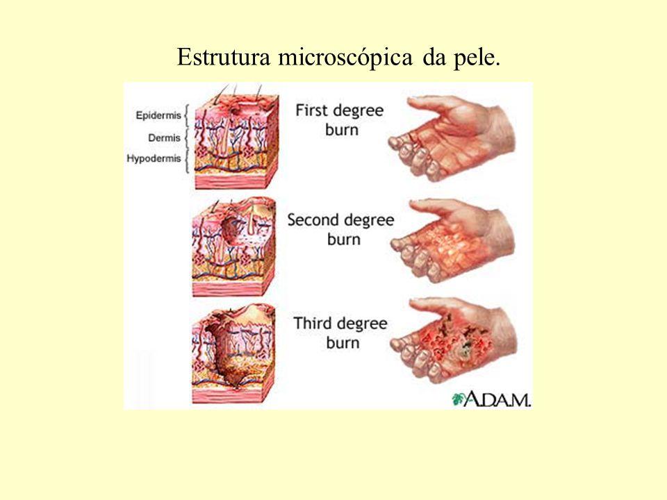 1.1.Proteção química: - As glândulas sudoríparas, sebáceas e lacrimais secretam substâncias químicas tóxicas para certas formas de bactérias (proteção antibacteriana).