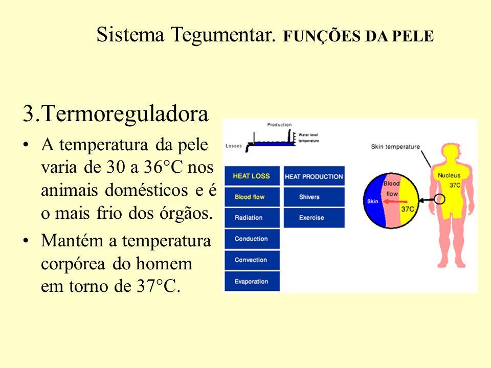 3.Termoreguladora Responsável por 90% do calor eliminado, restante: ar expirado, fezes e urina.