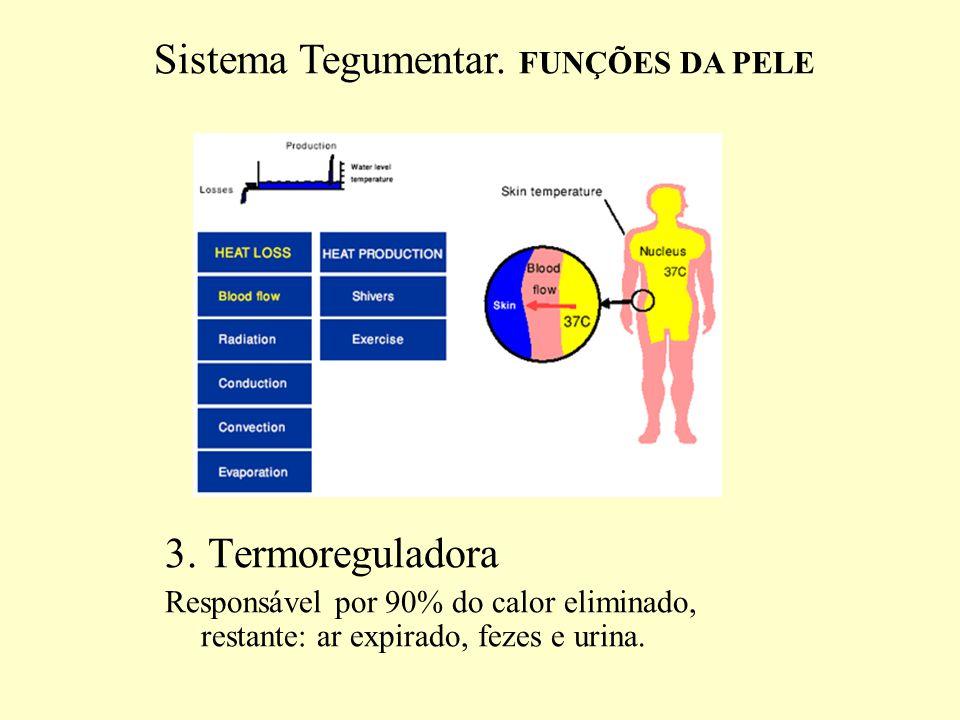 3.Termoreguladora Fluxo sangüíneo é de 400 ml/min.