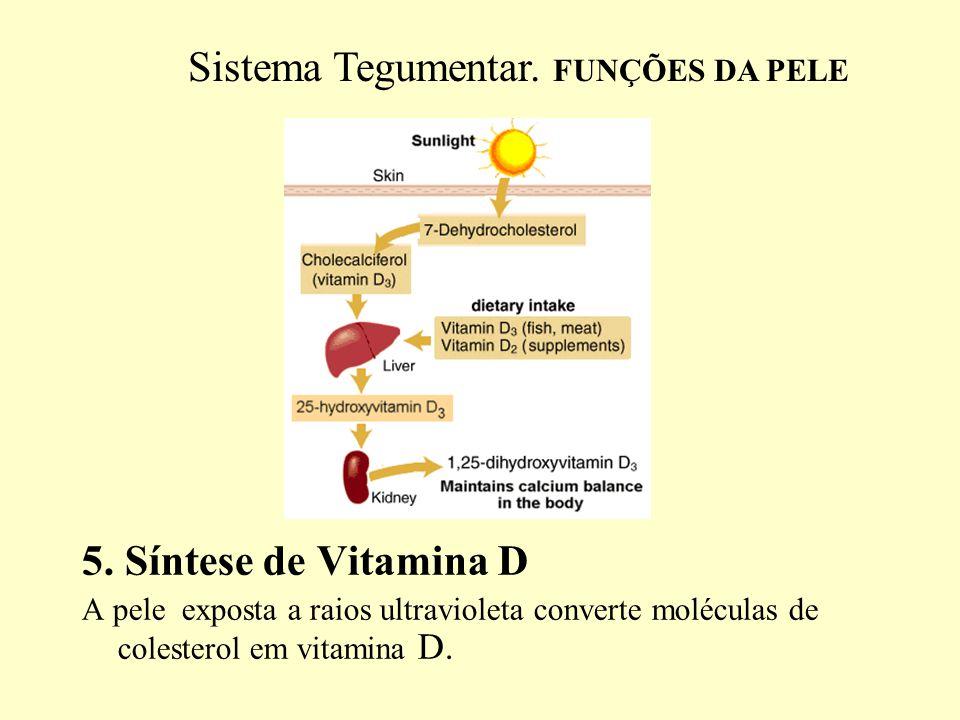 6.Excreção de substâncias residuais. Resíduos nitrogenados Mais pela urina e pouco pela pele.