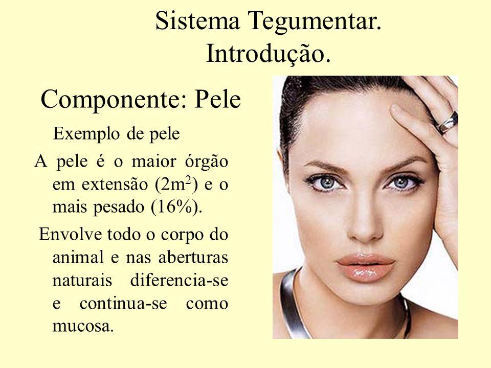 Exemplos de Anexos cutâneos ou derivados da pele Sistema Tegumentar. Introdução