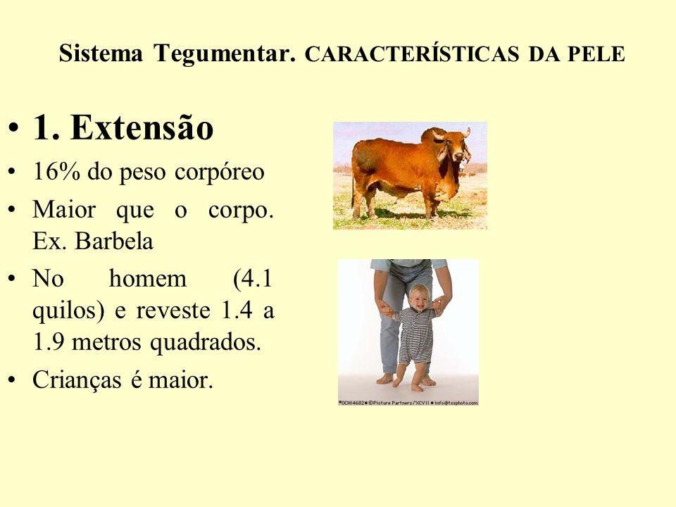 Sistema Tegumentar.CARACTERÍSTICAS DA PELE 1. Extensão 16% do peso corpóreo Maior que o corpo.