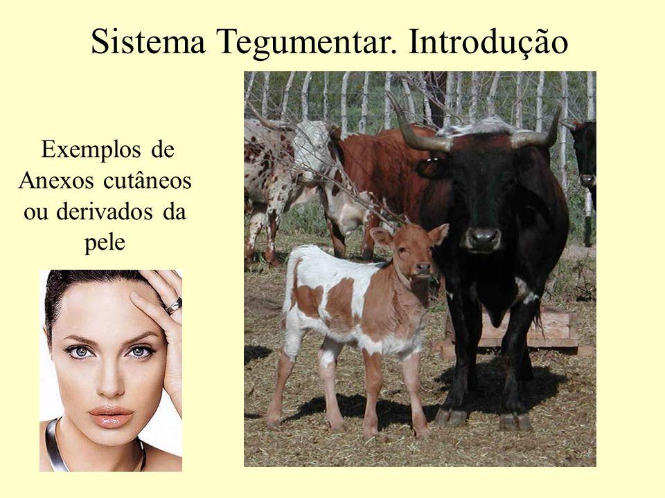 Estrutura microscópica da pele Sistema Tegumentar Dois componentes -Epiderme -Derme Em todos os vertebrados