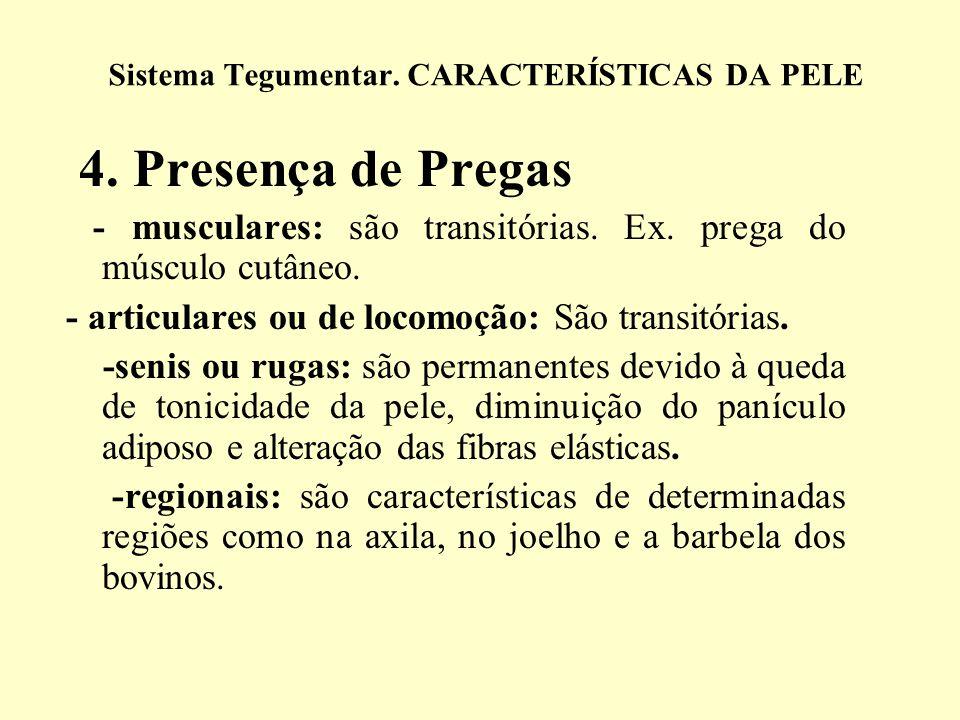 4. Presença de Pregas Cabracão Sistema Tegumentar. CARACTERÍSTICAS DA PELE