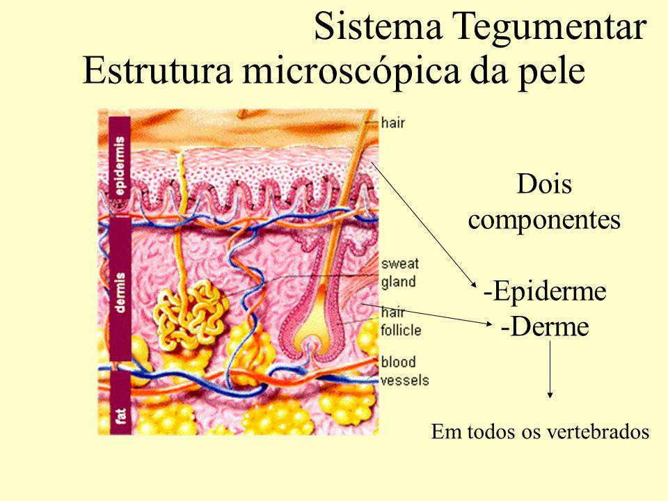 Estrutura microscópica da pele Componentes da pele: Epiderme.