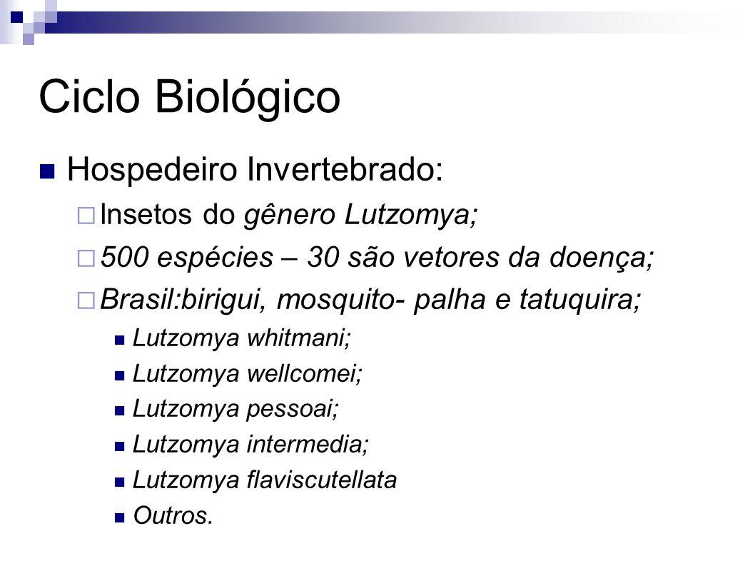 Ciclo Biológico Hospedeiro Invertebrado: Insetos do gênero Lutzomya; 500 espécies – 30 são vetores da doença; Brasil:birigui, mosquito- palha e tatuqu