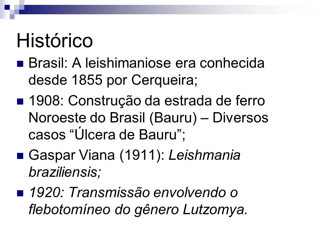 Histórico Brasil: A leishimaniose era conhecida desde 1855 por Cerqueira; 1908: Construção da estrada de ferro Noroeste do Brasil (Bauru) – Diversos c