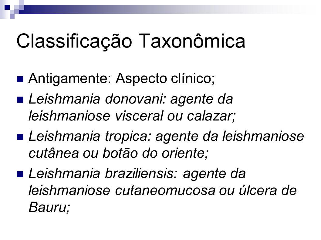 Classificação Taxonômica Antigamente: Aspecto clínico; Leishmania donovani: agente da leishmaniose visceral ou calazar; Leishmania tropica: agente da