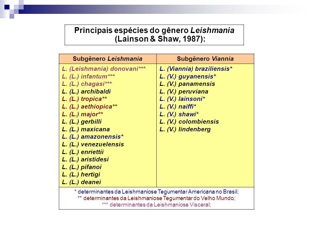 Principais espécies do gênero Leishmania (Lainson & Shaw, 1987): Subgênero LeishmaniaSubgênero Viannia L. (Leishmania) donovani*** L. (L.) infantum***