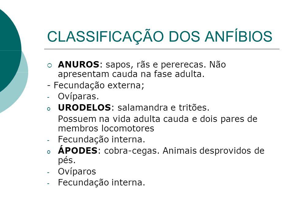 CLASSIFICAÇÃO DOS ANFÍBIOS ANUROS: sapos, rãs e pererecas. Não apresentam cauda na fase adulta. - Fecundação externa; - Ovíparas. o URODELOS: salamand