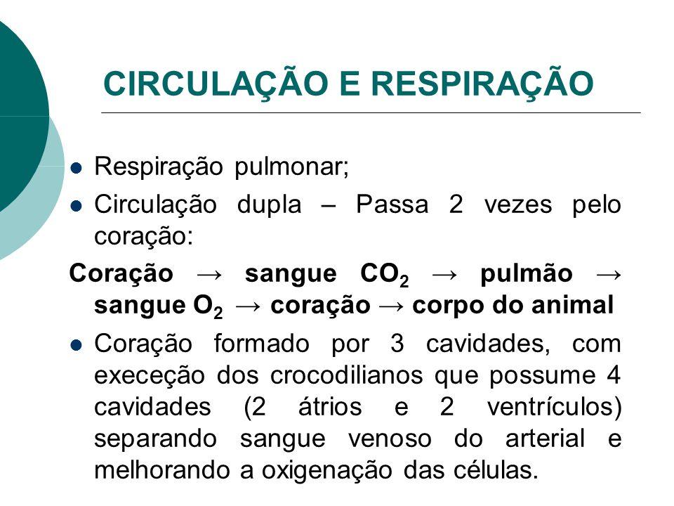 CIRCULAÇÃO E RESPIRAÇÃO Respiração pulmonar; Circulação dupla – Passa 2 vezes pelo coração: Coração sangue CO 2 pulmão sangue O 2 coração corpo do ani