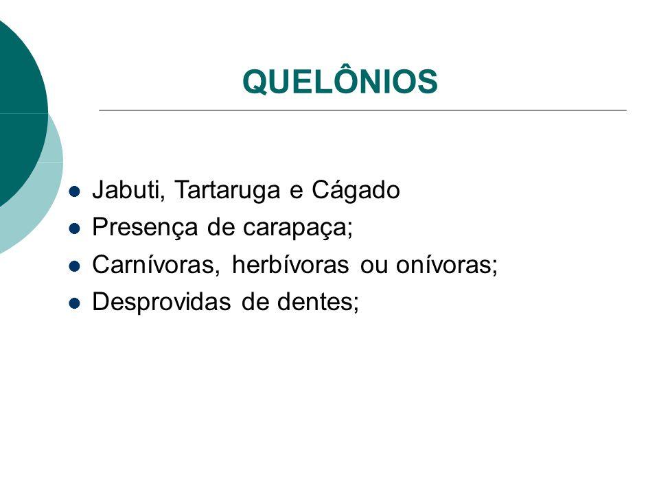 QUELÔNIOS Jabuti, Tartaruga e Cágado Presença de carapaça; Carnívoras, herbívoras ou onívoras; Desprovidas de dentes;