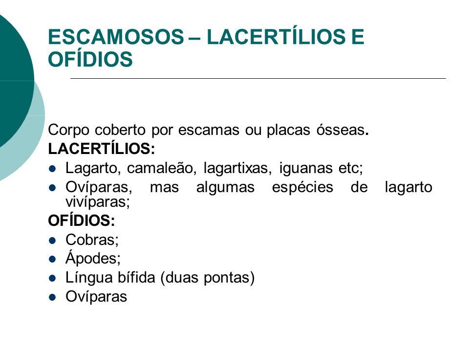 ESCAMOSOS – LACERTÍLIOS E OFÍDIOS Corpo coberto por escamas ou placas ósseas. LACERTÍLIOS: Lagarto, camaleão, lagartixas, iguanas etc; Ovíparas, mas a