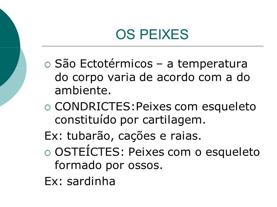 OS PEIXES São Ectotérmicos – a temperatura do corpo varia de acordo com a do ambiente. CONDRICTES:Peixes com esqueleto constituído por cartilagem. Ex: