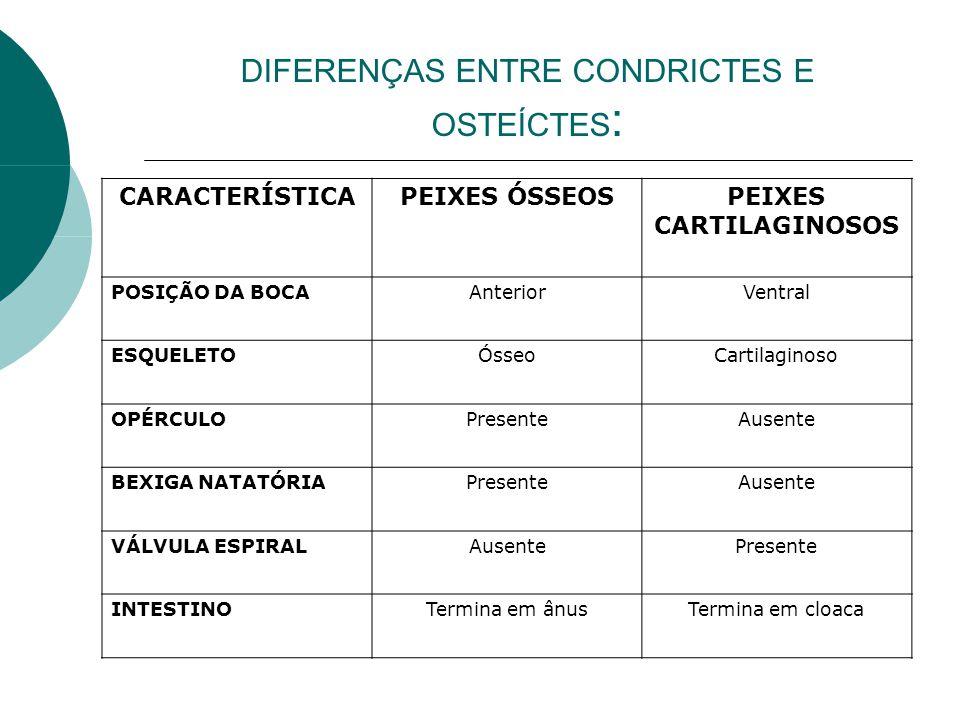 DIFERENÇAS ENTRE CONDRICTES E OSTEÍCTES : CARACTERÍSTICAPEIXES ÓSSEOS PEIXES CARTILAGINOSOS POSIÇÃO DA BOCAAnteriorVentral ESQUELETOÓsseoCartilaginoso
