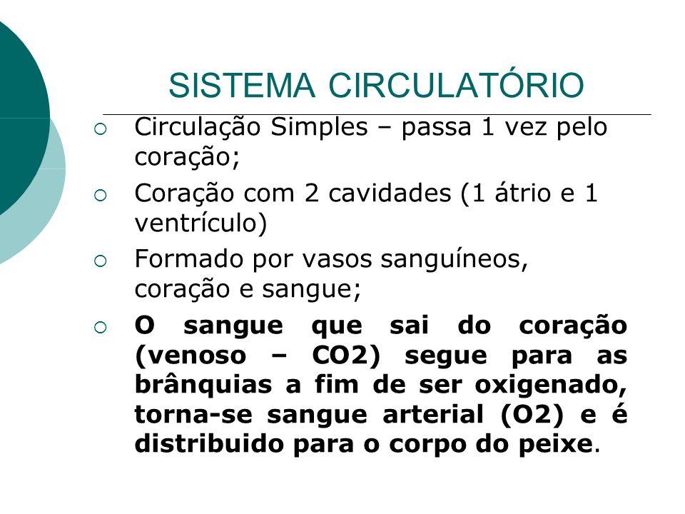 SISTEMA CIRCULATÓRIO Circulação Simples – passa 1 vez pelo coração; Coração com 2 cavidades (1 átrio e 1 ventrículo) Formado por vasos sanguíneos, cor