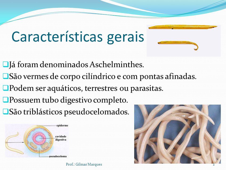 Características gerais Já foram denominados Aschelminthes.