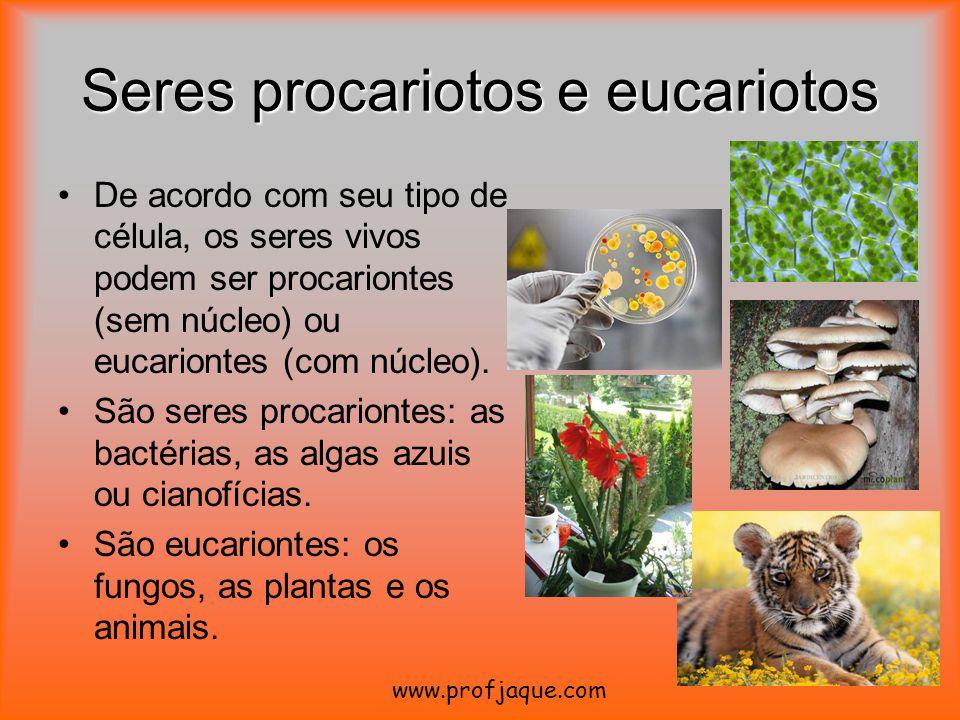 Seres procariotos e eucariotos De acordo com seu tipo de célula, os seres vivos podem ser procariontes (sem núcleo) ou eucariontes (com núcleo). São s