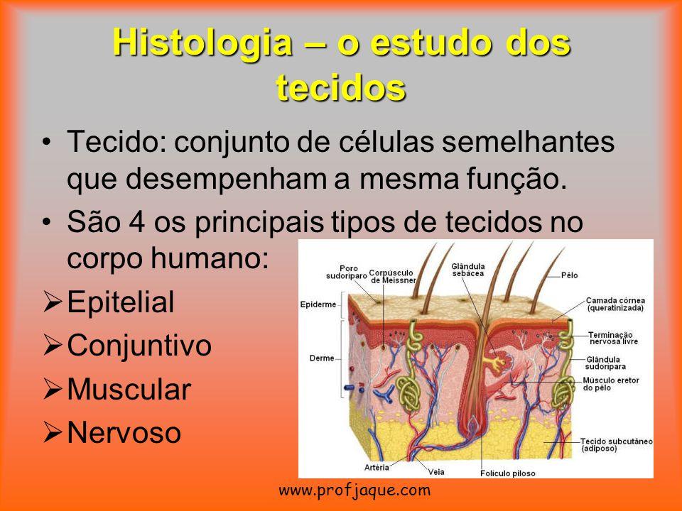 Histologia – o estudo dos tecidos Tecido: conjunto de células semelhantes que desempenham a mesma função. São 4 os principais tipos de tecidos no corp