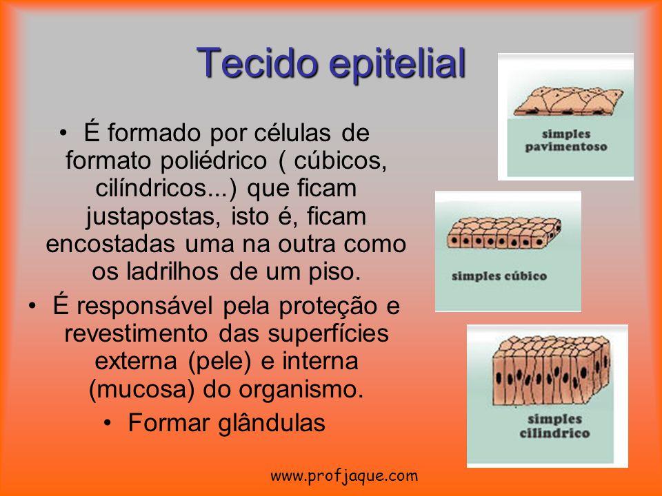 Tecido epitelial É formado por células de formato poliédrico ( cúbicos, cilíndricos...) que ficam justapostas, isto é, ficam encostadas uma na outra c