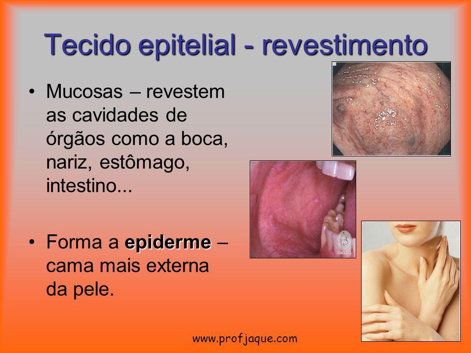 Mucosas – revestem as cavidades de órgãos como a boca, nariz, estômago, intestino... epidermeForma a epiderme – cama mais externa da pele. Tecido epit