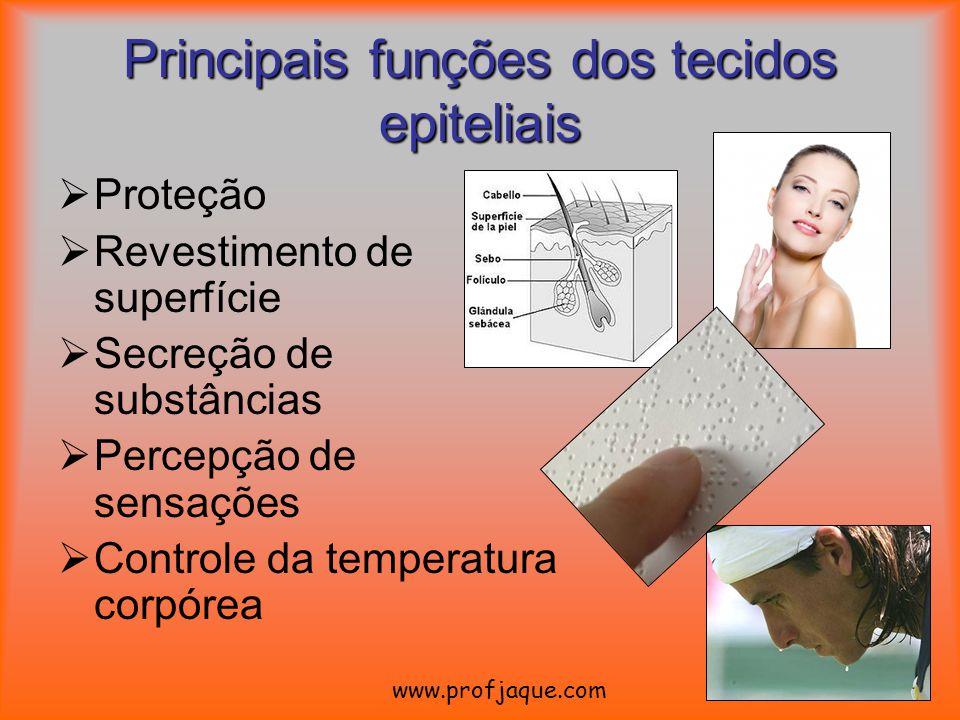 Principais funções dos tecidos epiteliais Proteção Revestimento de superfície Secreção de substâncias Percepção de sensações Controle da temperatura c