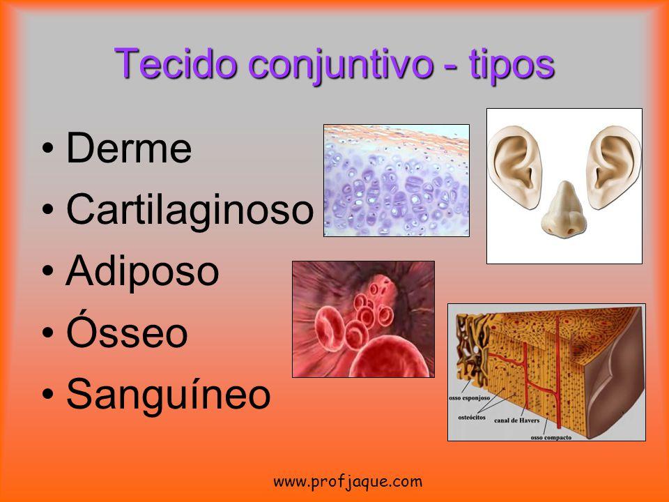 Derme Cartilaginoso Adiposo Ósseo Sanguíneo www.profjaque.com Tecido conjuntivo - tipos