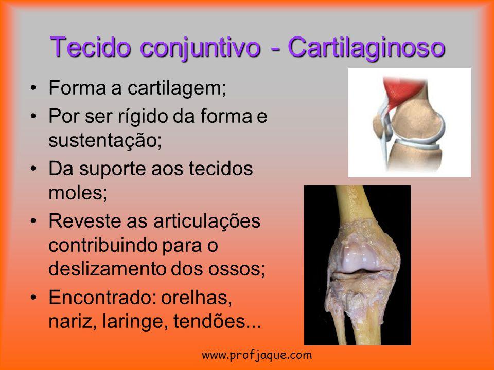Forma a cartilagem; Por ser rígido da forma e sustentação; Da suporte aos tecidos moles; Reveste as articulações contribuindo para o deslizamento dos