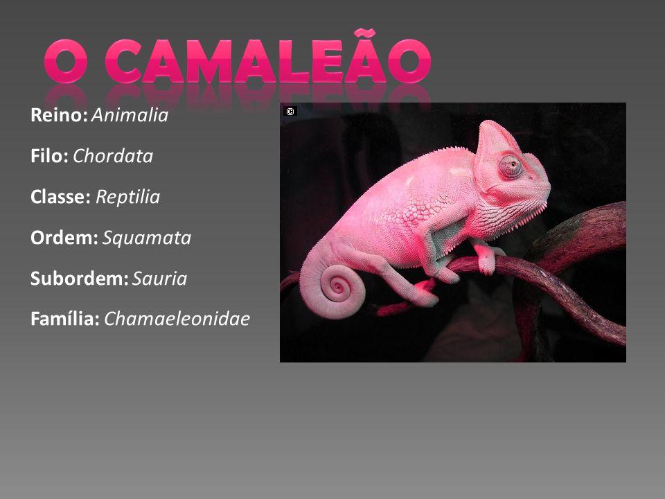 Reino: Animalia Filo: Chordata Classe: Reptilia Ordem: Squamata Subordem: Sauria Família: Chamaeleonidae