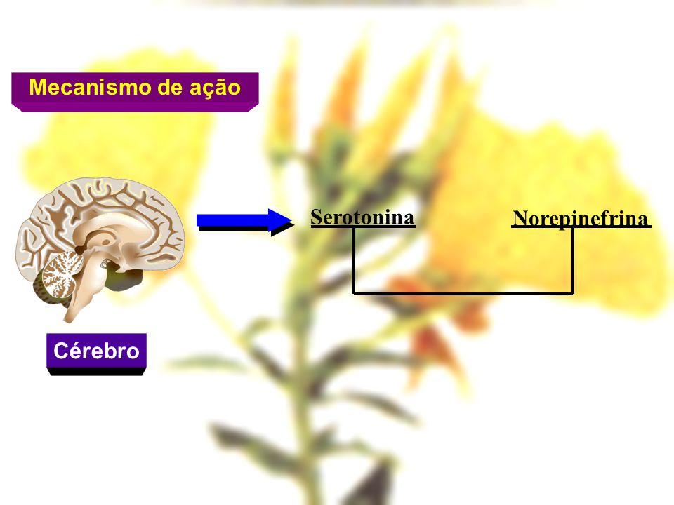 Serotonina Norepinefrina Mecanismo de ação Cérebro