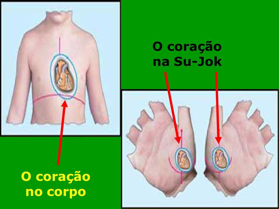 O coração no corpo O coração na Su-Jok
