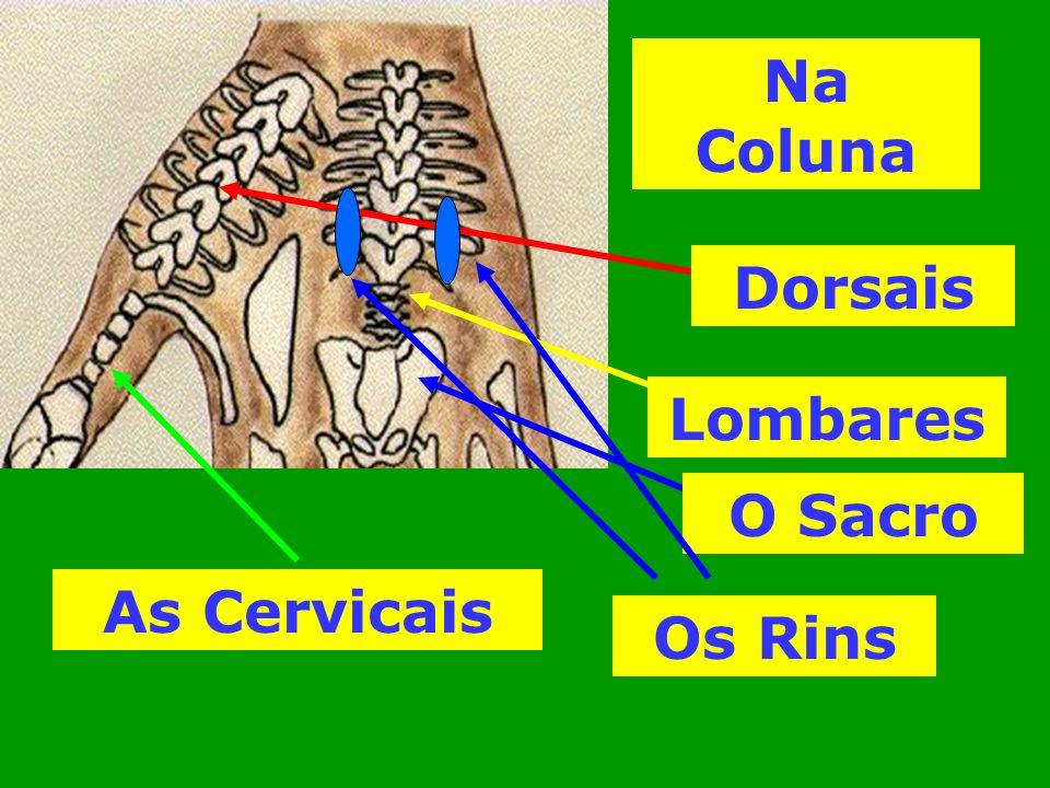 Na Coluna O Sacro Lombares Dorsais As Cervicais Os Rins