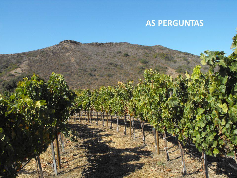 Perguntas: 1 : Como utilizar a notoriedade de um vinho para fazer descobrir uma região.