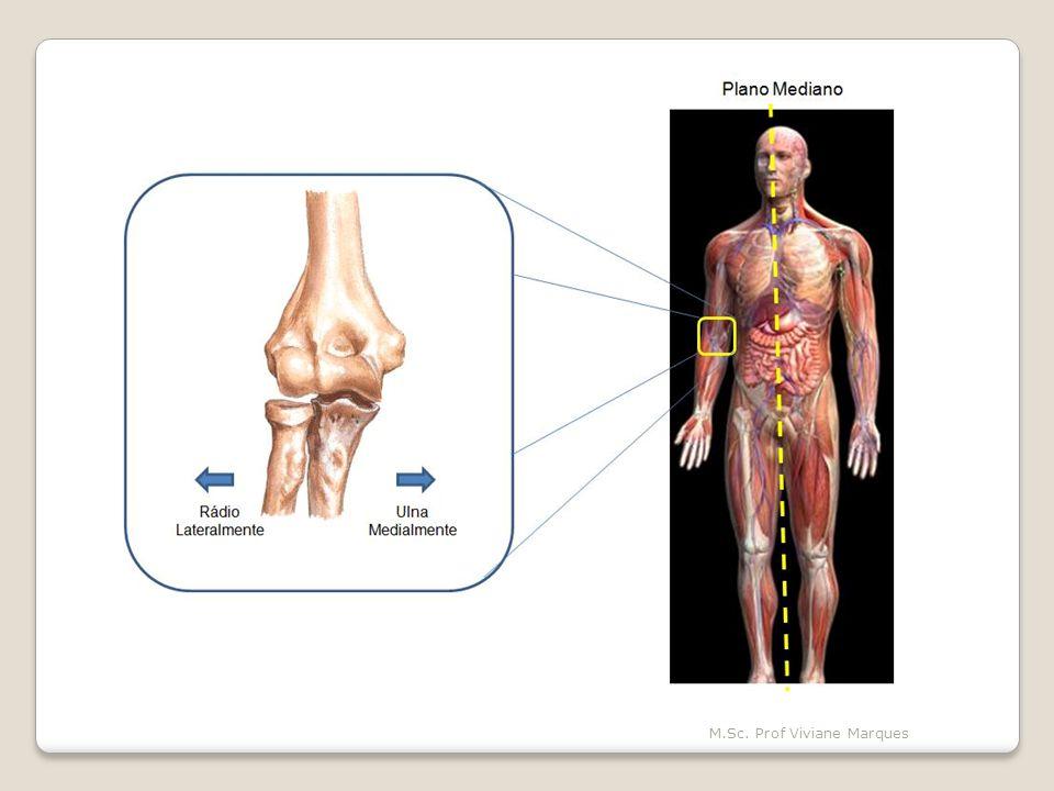 Superior e inferior descrevem estruturas em referência ao eixo vertical do corpo.