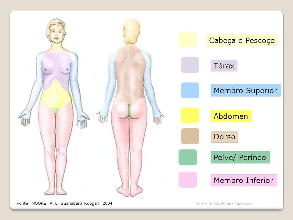 A posição anatômica é a referência-padrão do corpo usada para descrever a localização de estruturas.