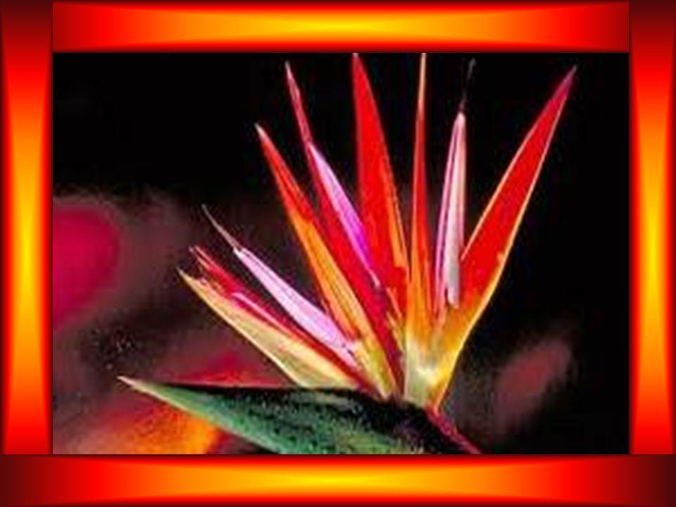 OREMOS Deus nosso Pai, nós Te bendizemos por toda a criação. Mesmo as flores efêmeras e as vaidades dão testemunho de Ti. Ensinam-nos que permaneces e