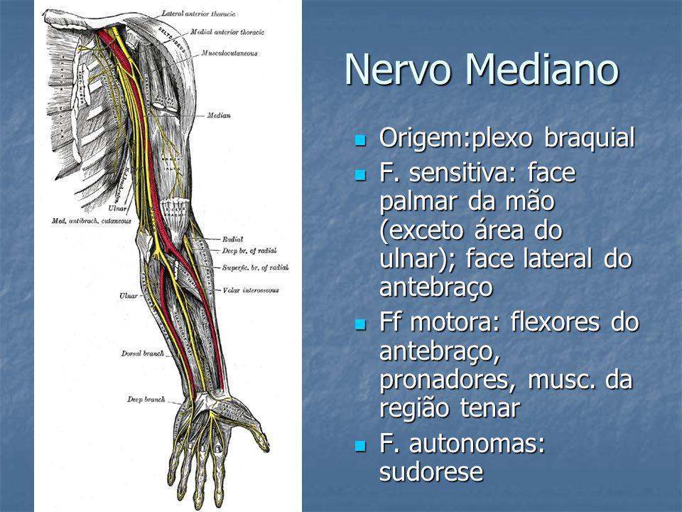 Nervo Mediano Origem:plexo braquial Origem:plexo braquial F. sensitiva: face palmar da mão (exceto área do ulnar); face lateral do antebraço F. sensit