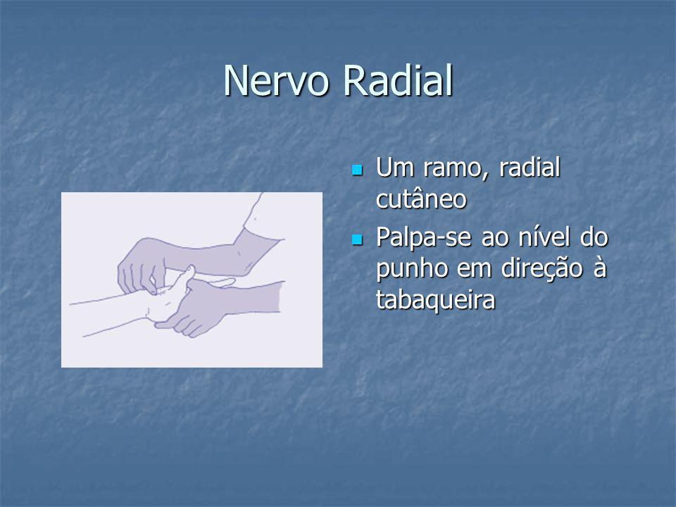 Nervo Radial Um ramo, radial cutâneo Um ramo, radial cutâneo Palpa-se ao nível do punho em direção à tabaqueira Palpa-se ao nível do punho em direção à tabaqueira