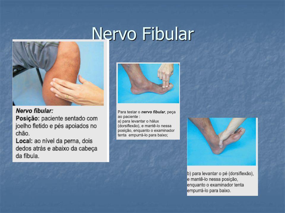 Nervo Fibular