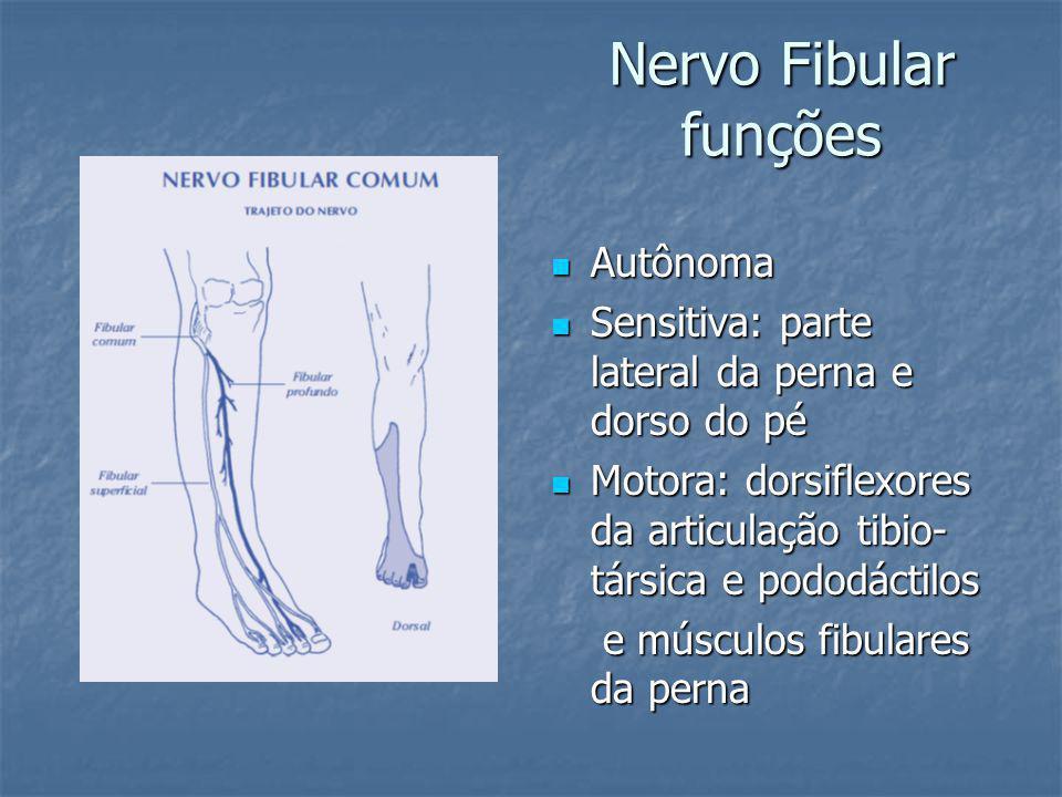 Nervo Fibular funções Autônoma Autônoma Sensitiva: parte lateral da perna e dorso do pé Sensitiva: parte lateral da perna e dorso do pé Motora: dorsiflexores da articulação tibio- társica e pododáctilos Motora: dorsiflexores da articulação tibio- társica e pododáctilos e músculos fibulares da perna e músculos fibulares da perna