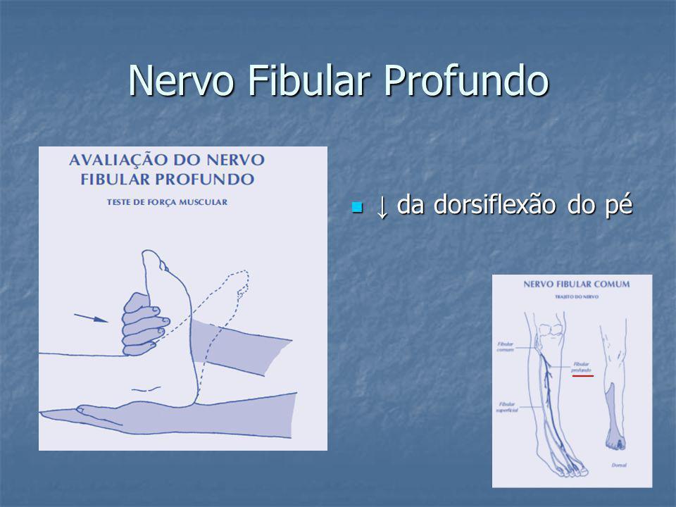 Nervo Fibular Profundo da dorsiflexão do pé da dorsiflexão do pé