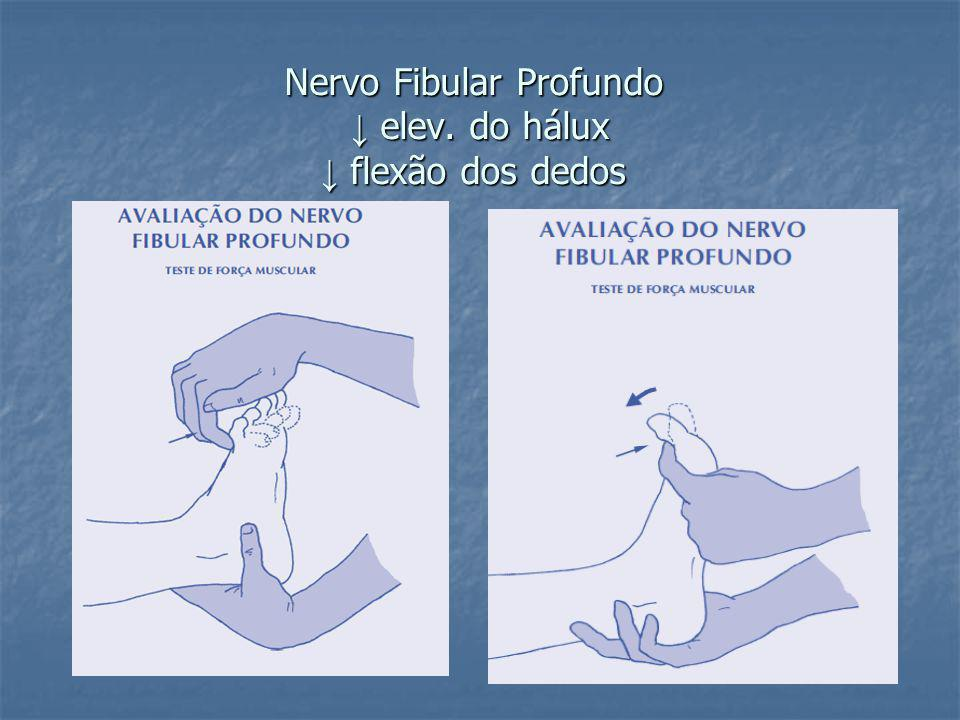 Nervo Fibular Profundo elev. do hálux flexão dos dedos