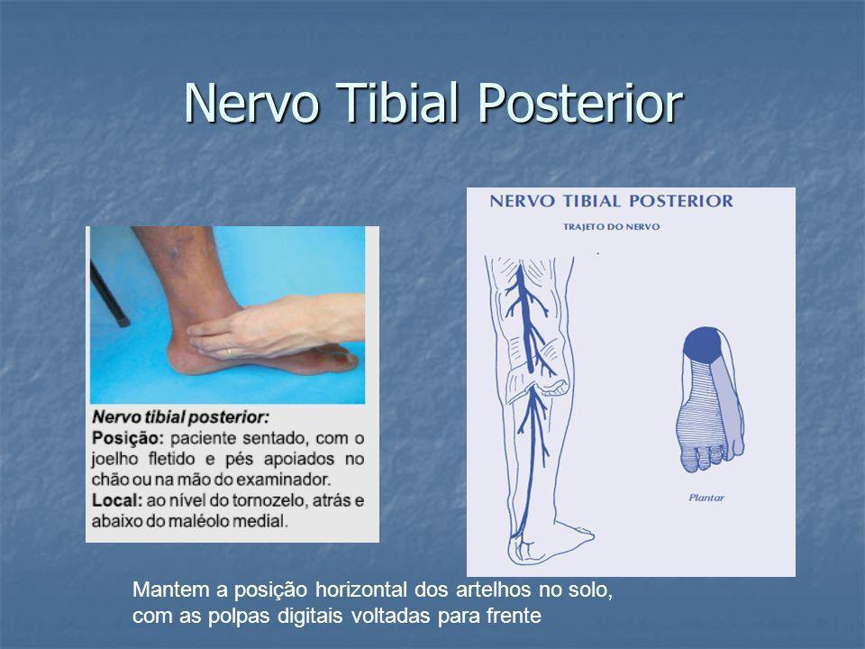 Nervo Tibial Posterior Mantem a posição horizontal dos artelhos no solo, com as polpas digitais voltadas para frente