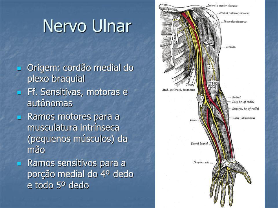 Nervo Ulnar - Funções SENSITIVA Parte medial do braço, mão, 5.º dedos e parte medial do 4.º dedo Parte medial do braço, mão, 5.º dedos e parte medial do 4.º dedoMOTORA Abdução e adução dos dedos Abdução e adução dos dedos Adução do polegar Adução do polegar Posição intrínseca da mão (4.º e 5.º dedos) Posição intrínseca da mão (4.º e 5.º dedos)