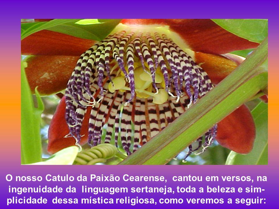 A flor do maracujá é mesmo mágica, foi cantada em verso e prosa ao redor do mundo. Quando a vi pela primeira vez tive uma sensação de tristeza e alegr