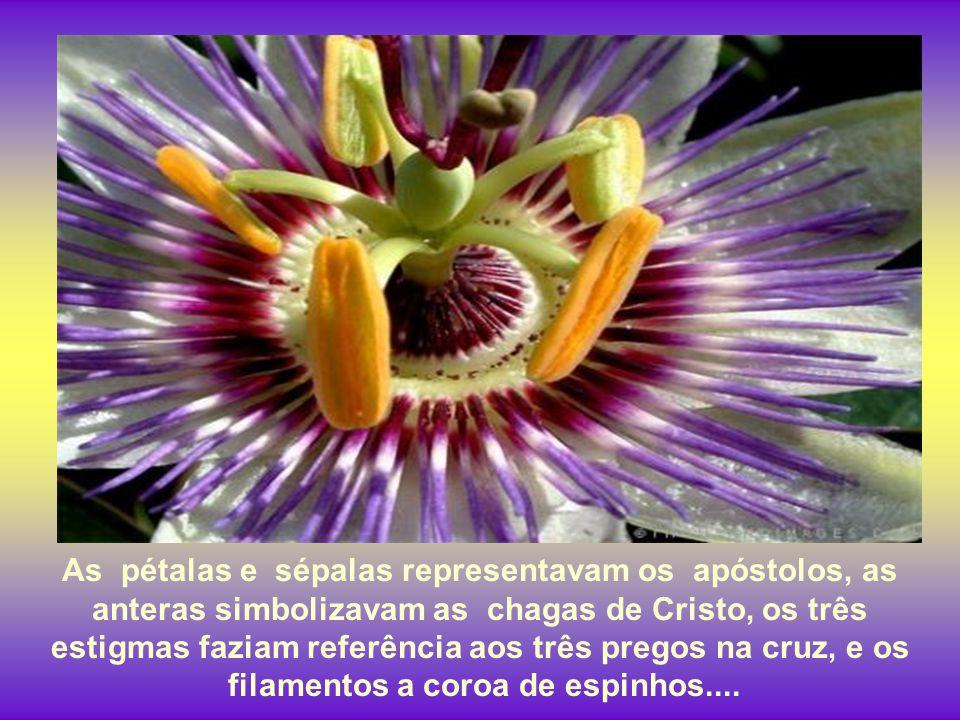 Missionários espanhóis do século XVI viram a flor do maracujá e ficaram em êxtase. Acharam que sua estrutura representava a Paixão de Cristo.