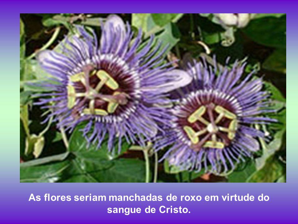 I O sangui de Jesus Cristo sangui pisado de dô nus pé du maracujá tingia todas as flor