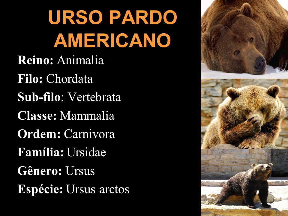 URSO PARDO AMERICANO Reino: Animalia Filo: Chordata Sub-filo: Vertebrata Classe: Mammalia Ordem: Carnivora Família: Ursidae Gênero: Ursus Espécie: Urs