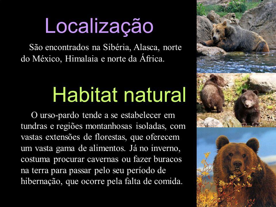 Localização São encontrados na Sibéria, Alasca, norte do México, Himalaia e norte da África. Habitat natural O urso-pardo tende a se estabelecer em tu